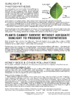 116A_PHOTOSYNTHESIS_POSTER_What_Happens_When_We_Artificially_Reduce_the_Amount_of_Direct_Sunlight_Reaching_the_Earth
